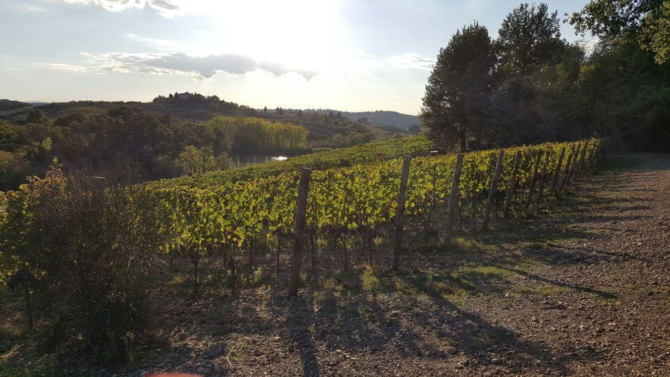 Il miglior vigneto per il 2016. These wines produced the best grapes in 2016.