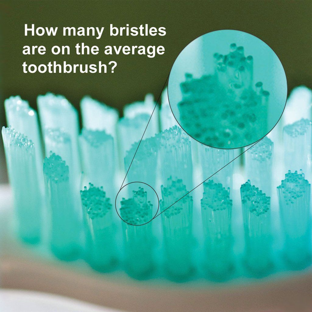 HOW MANY BRISTLES do you think the average toothbrush has