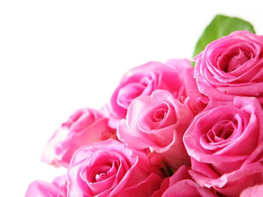 Gambar Bunga Mawar Pink Yang Banyak Life Is Beautiful Life Is Good