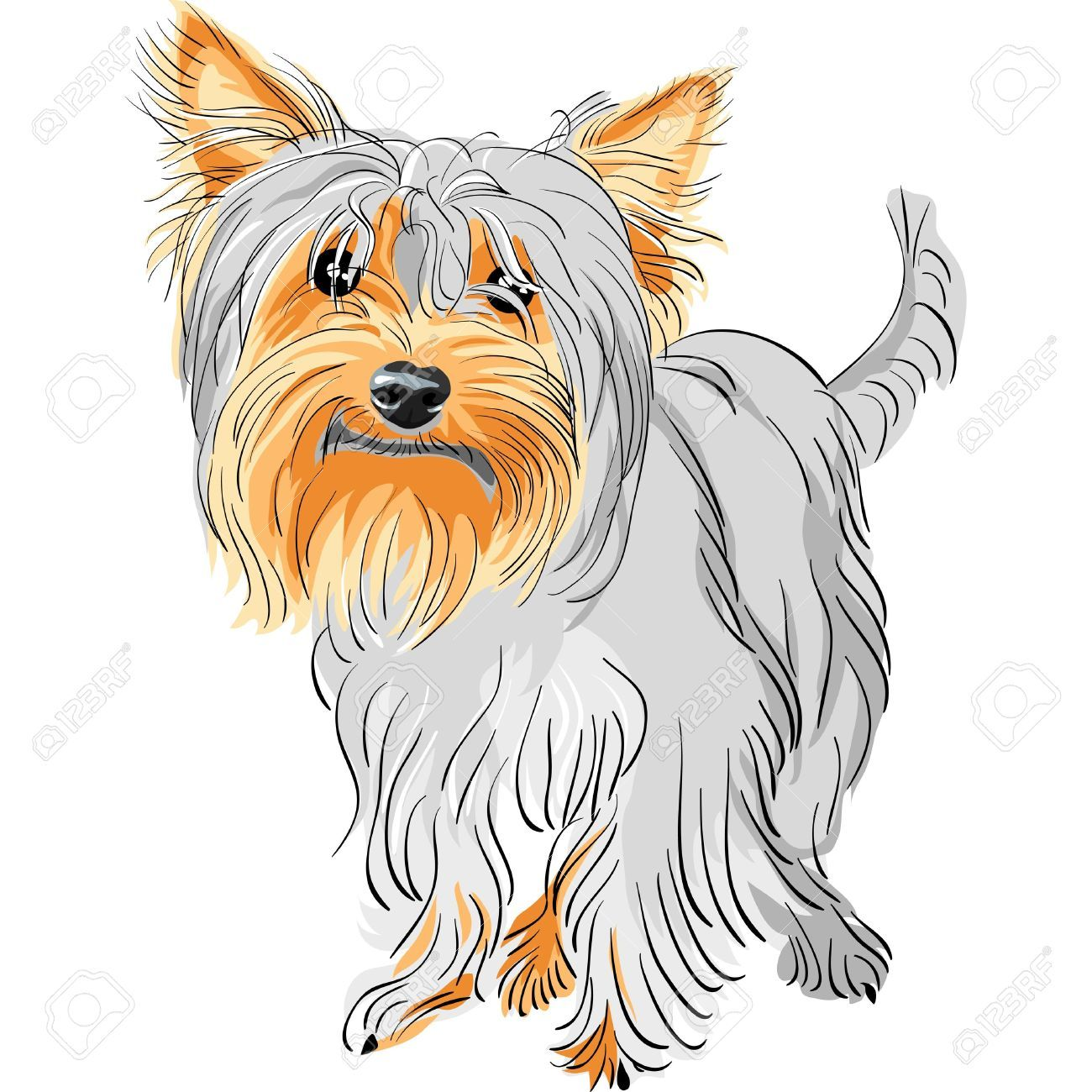 Coloring Yorkie Coloring Pages Yorkshire Terrier Teacup Yorkshire Terrier Yorkie