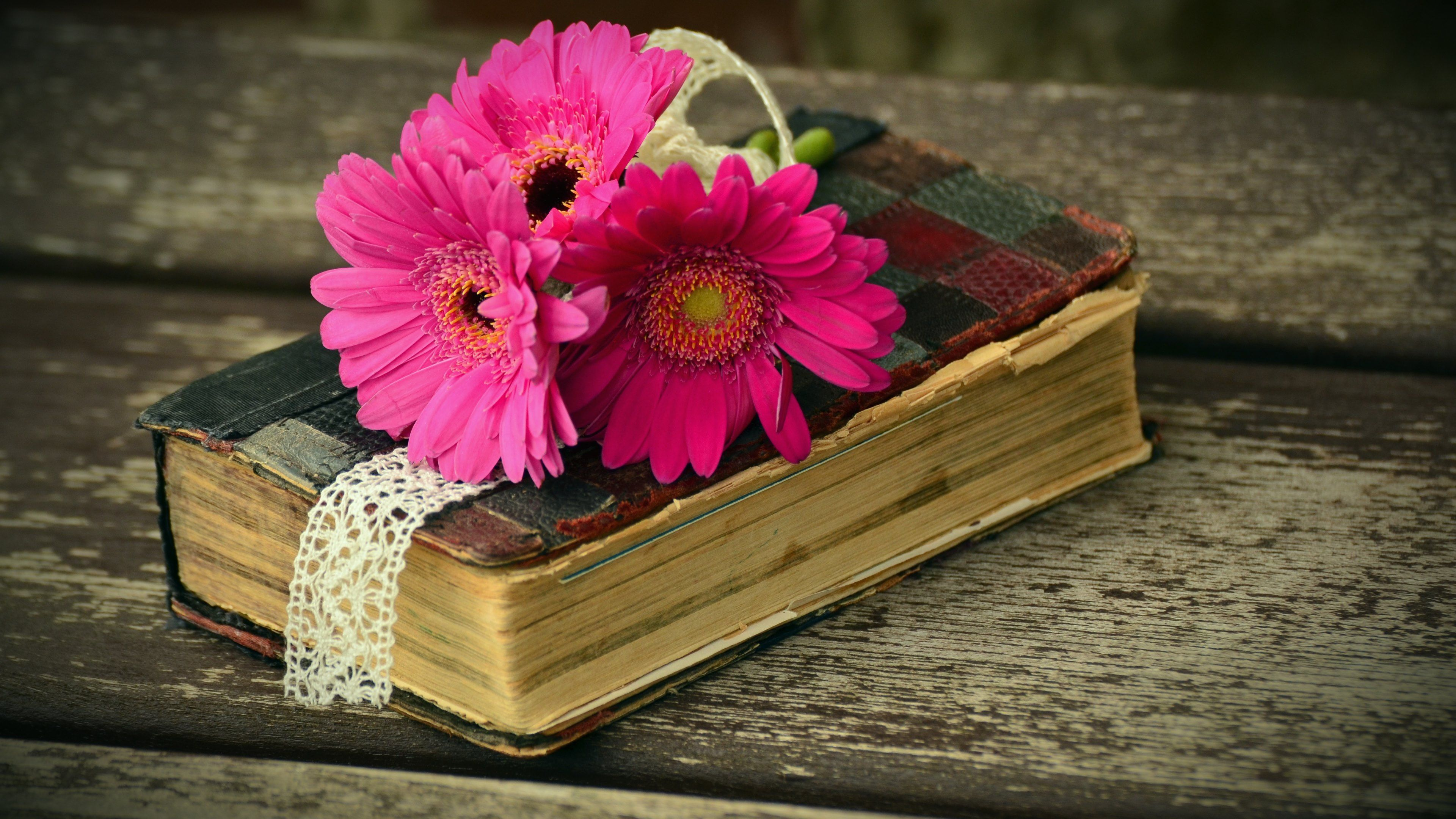 Old Book And Gerbera Flowers Wallpapers 4k Hd Desktop Books