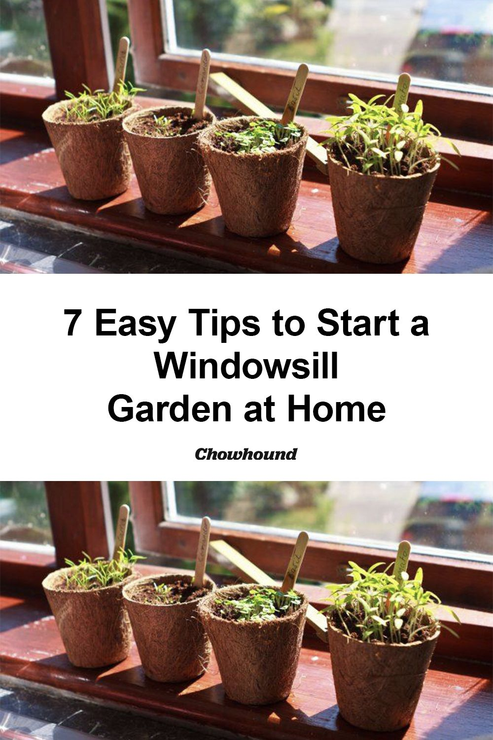 7 Easy Tips to Start a Windowsill Garden at Home in 2020