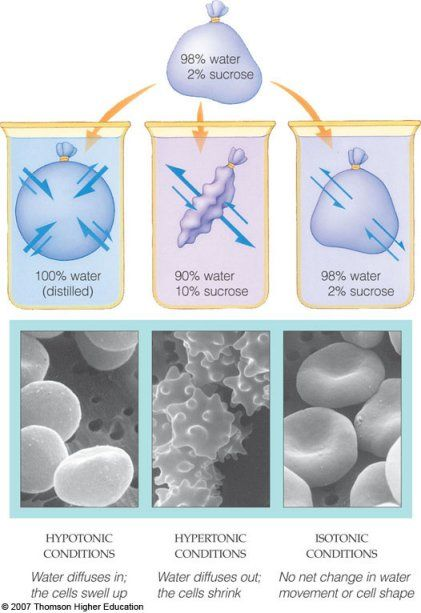 Hypotonic Hypertonic Isotonic Biology Activity Biology Teacher Study Biology