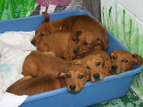 5 Underweight And Lethargic Puppies Found On Side Of Road By Good
