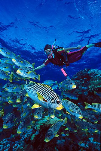 Ghummo andaman launches adventure package for andaman our offering jungle village resort - Dive great barrier reef ...