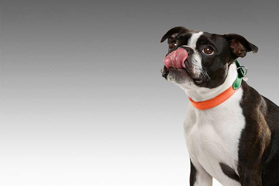 Mulberry stil sahibi olması gereken isimler kategorisini genişletiyor. Yılbaşını iyi geçirmek sadece insanlara özgü olmasın diyen marka, köpekler için bir tasma koleksiyonu hazırladı.