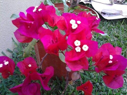 Veranera, mi jardin
