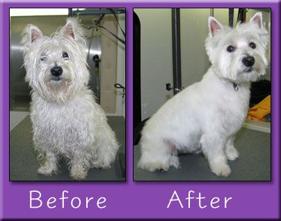 Dog Grooming Tips Before And After Grooming My Pet Dog Photo