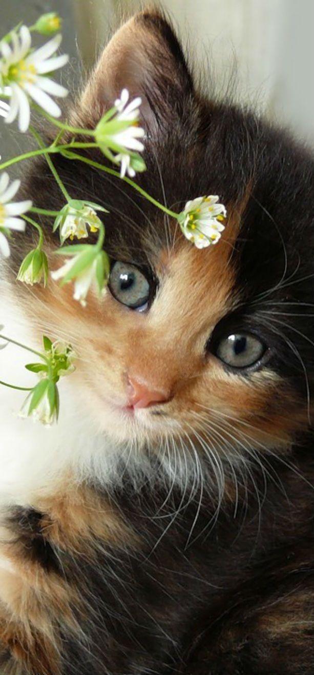 Pin By Misty Jones On Cat Cuties Pretty Cats Cute Animals Kittens Cutest