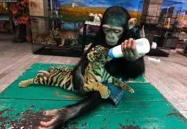 Cuidando al bebé