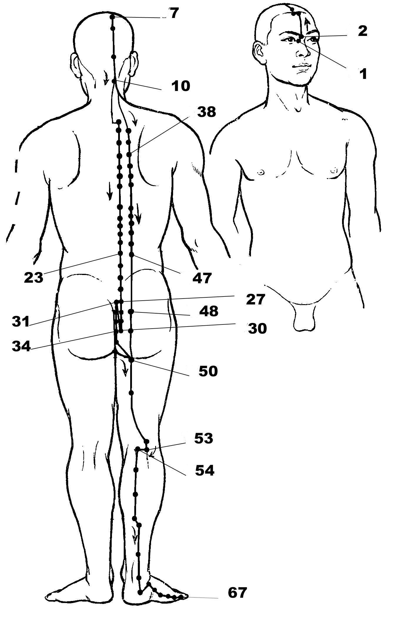 Les Meri Ns D Acupression Planches Et Description