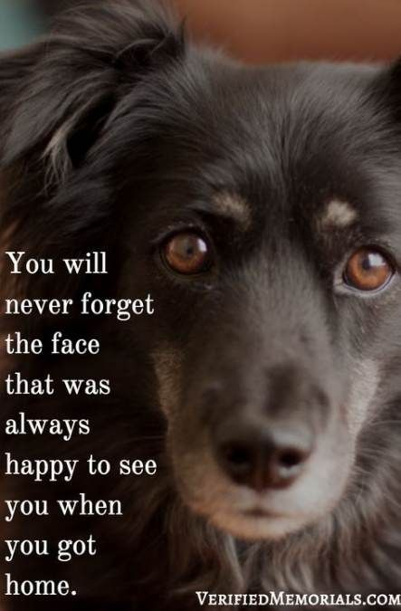 69+ Ideas Losing A Pet Quotes Dogs Lost #dogs #quotes #pet