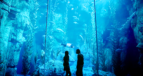 fish tank dating site