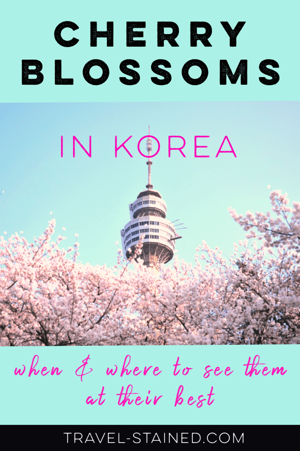 Cherry Blossoms In Korea Forecast 2020 Best Places To See Them Travel Stained South Korea Travel Travel Destinations Asia Korea Travel