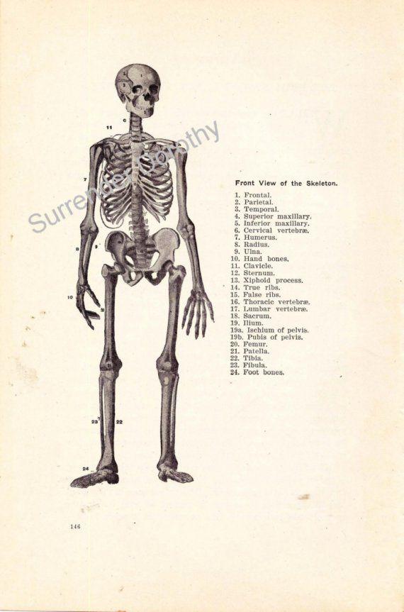 Skeleton Man Human Anatomy Chart Skeletal By Surrenderdorothy