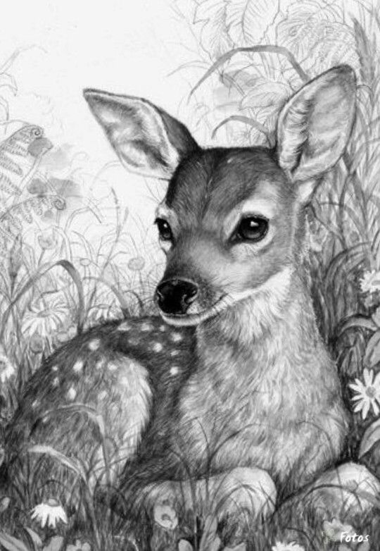 Pin De Isabella Maldonado En Grafito Animales Cuadros De Animales