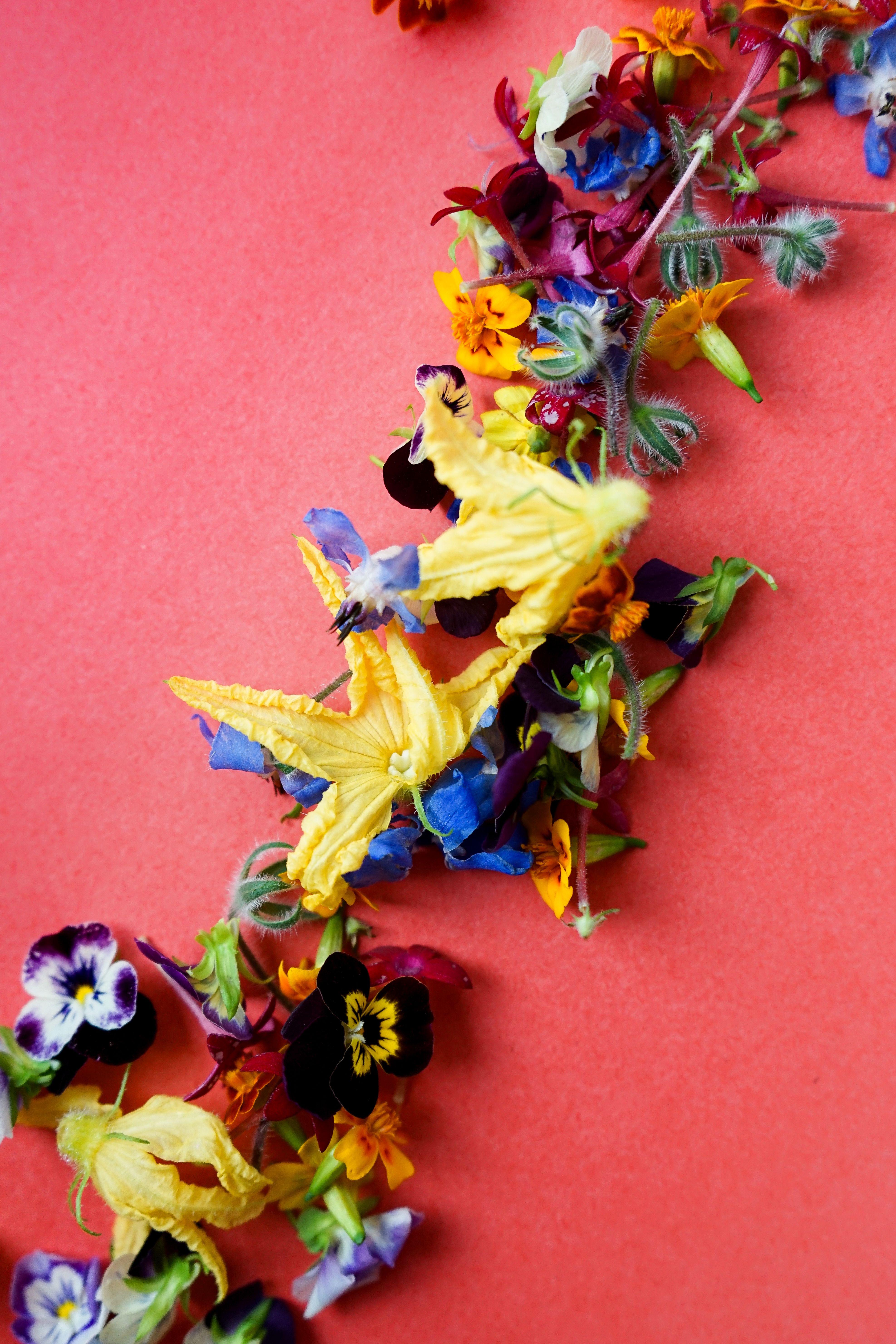 Edible flowers gardening kit edible flowers flowers
