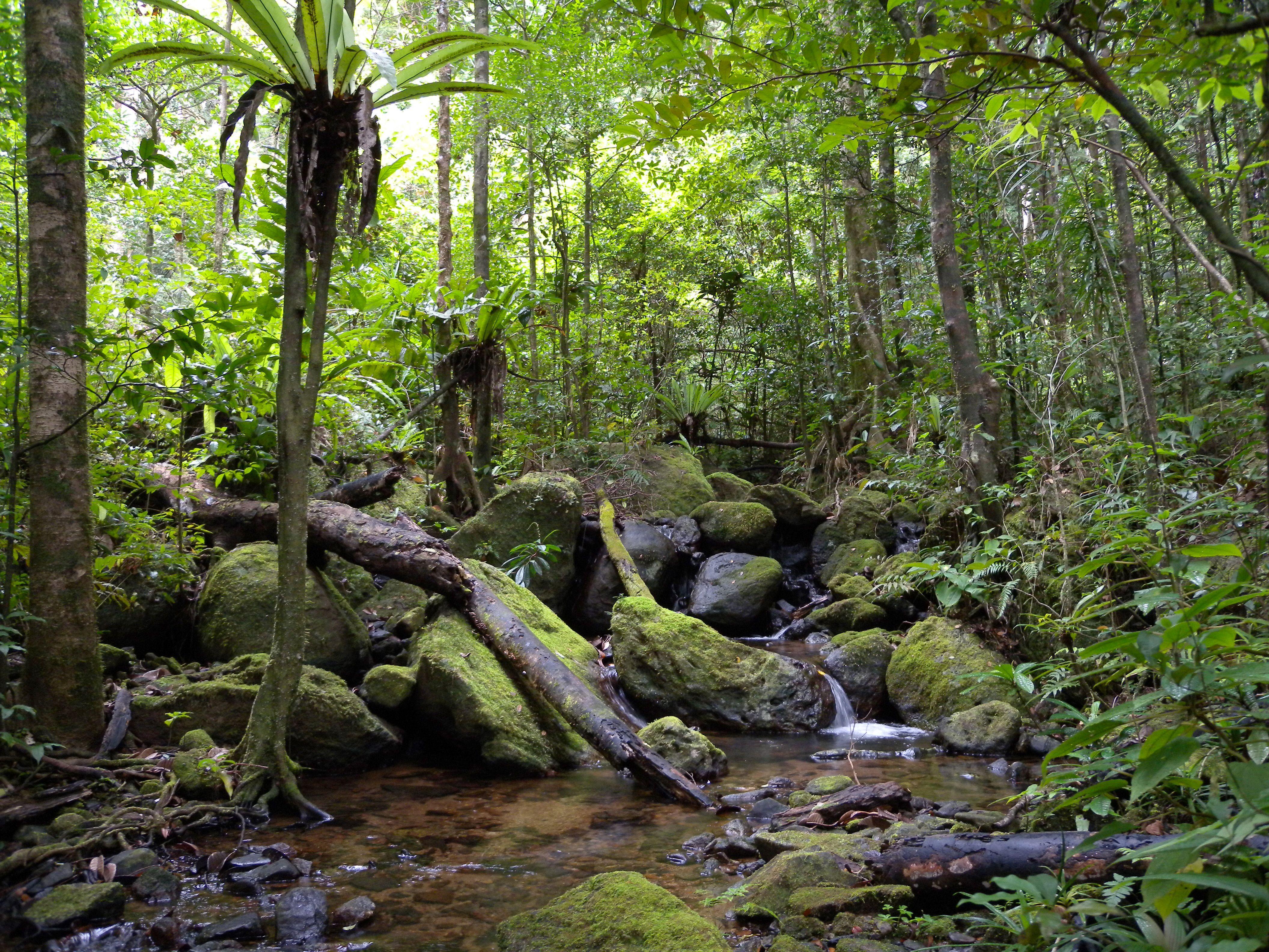25+ best ideas about Rainforest pictures on Pinterest | Dog ...