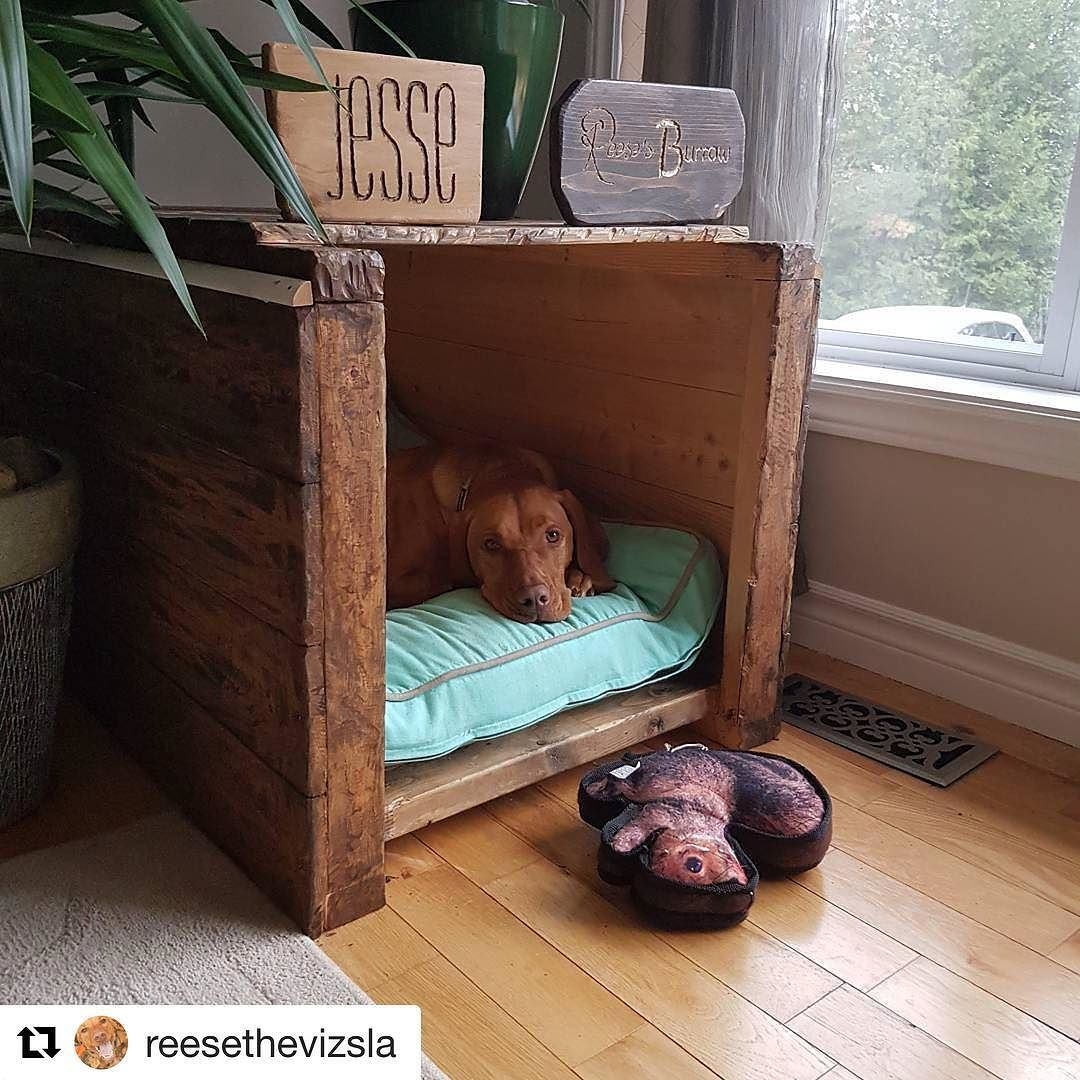 Reese has the coziest burrow we've seen!! luckypup