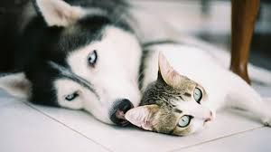 Image result for unlikely animal friends