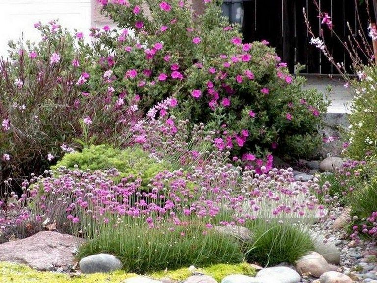 33+ Top Drought Tolerant Plants That Grow In Lack Of Water
