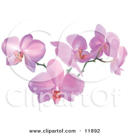 Pin By Kanani Morris On Cool Tattoo Pink Orchids Orchid Flower Orchid Tattoo