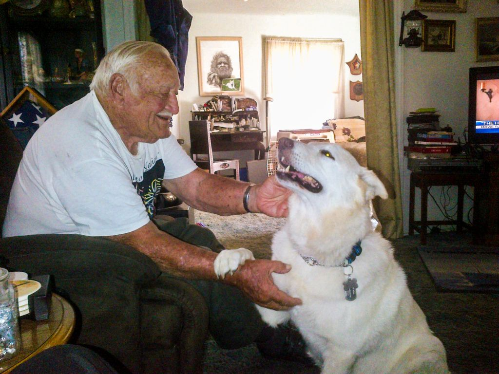 Senior Veteran Rescues Fellow Sailors Senior Gsd From Euthanasia Dog Gsd Rescue Dogs Dog Care