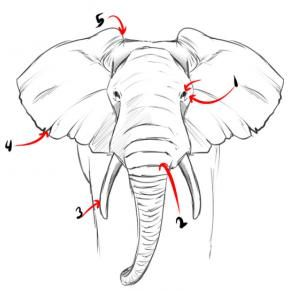 How To Draw A Realistic Elephant Draw Real Elephant Step