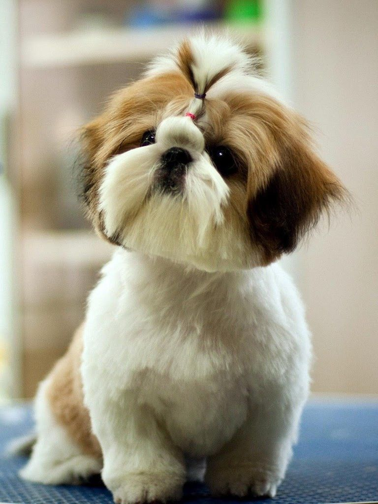 pinsweet and sassy100 on cute dogs | pinterest | dog