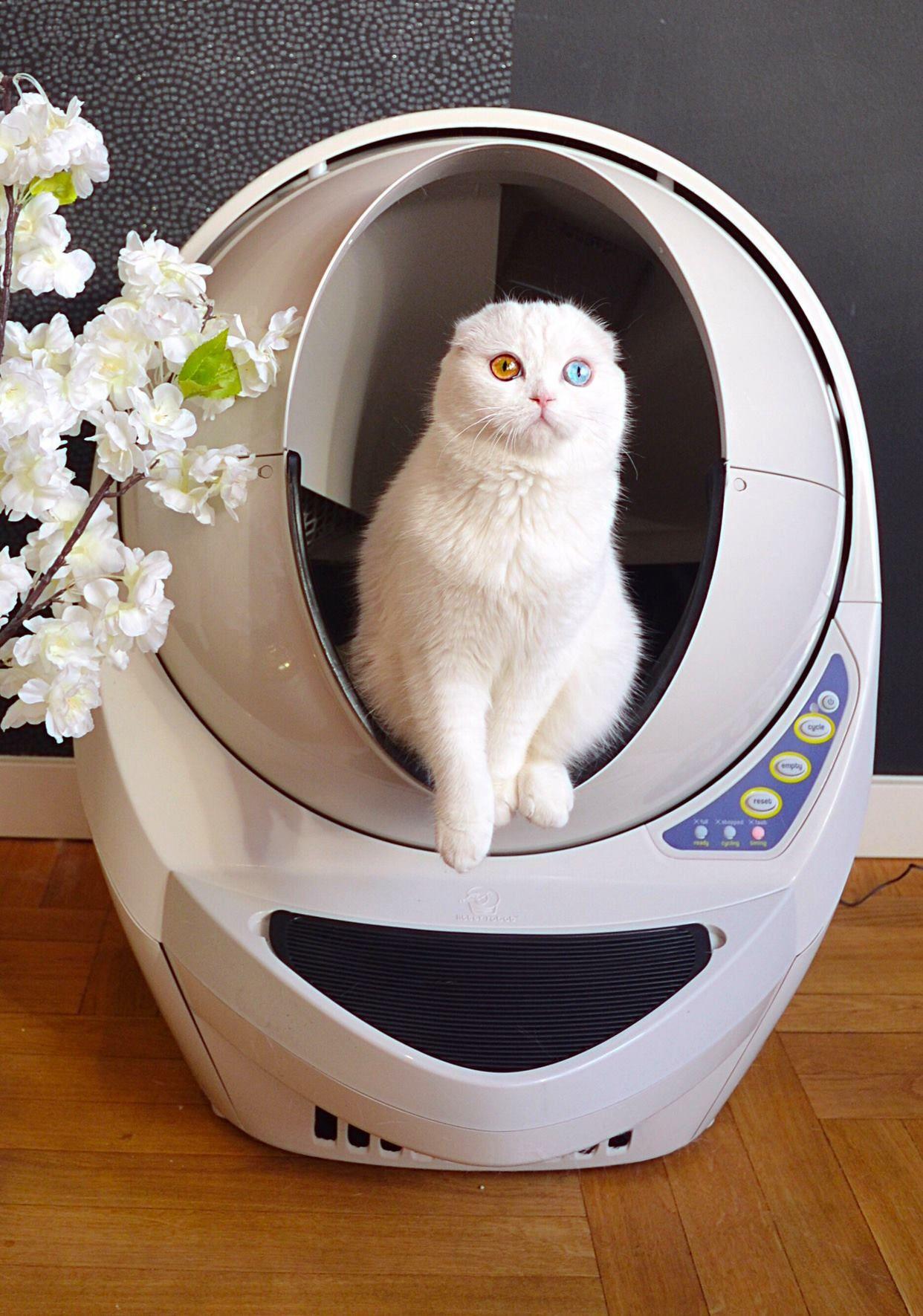 Automatic LitterRobot III Open Air Litter robot, Cat