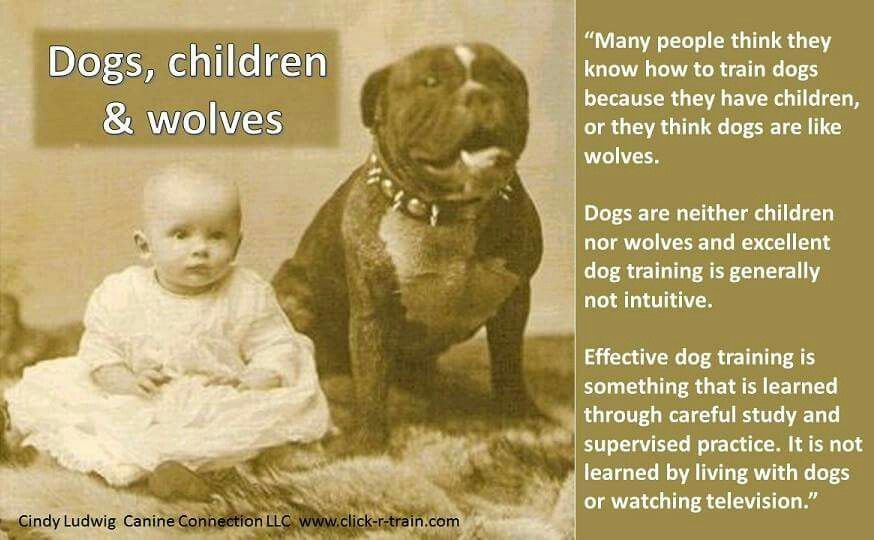 Dogs Are Dogs And Training Is A Skill Learned Through Much