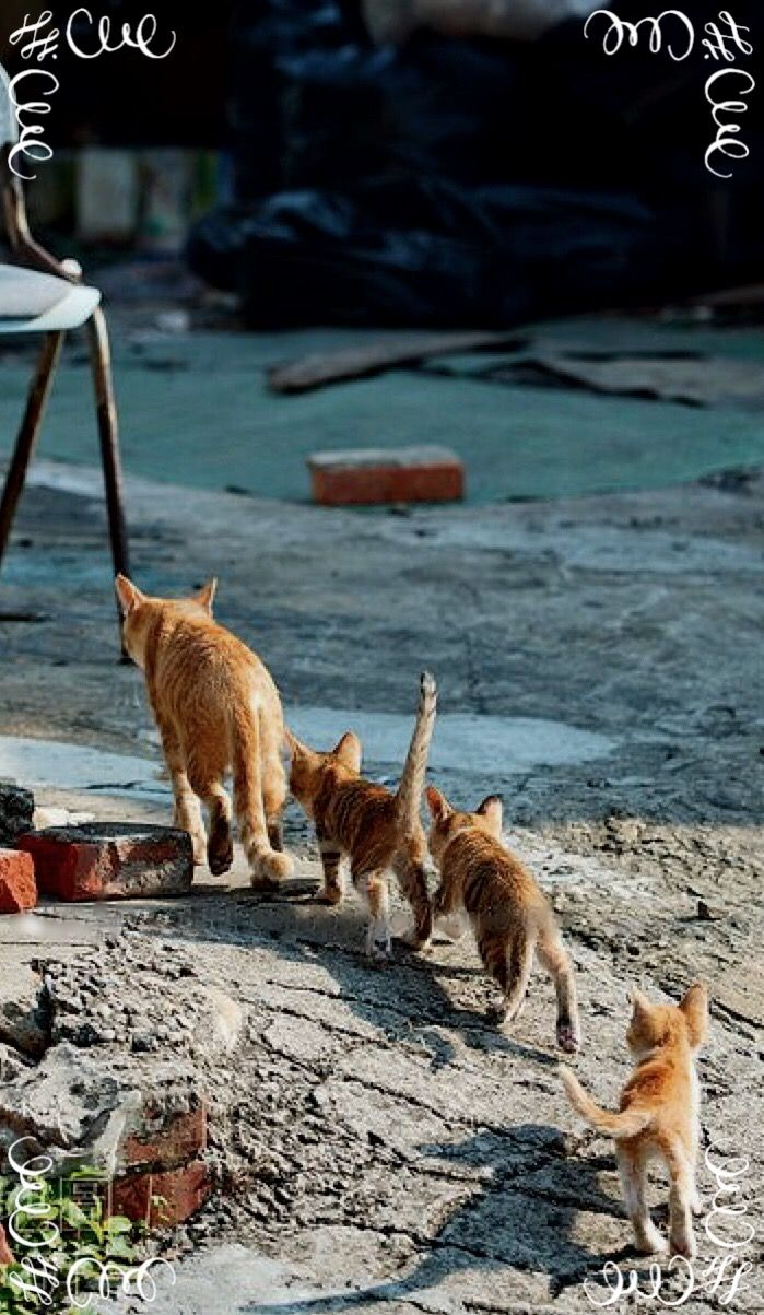 Ginger cat family, on the move!