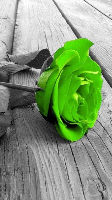 Beauty Of Whatever Kind In Its Supreme Development Invariably Excites The Sensitive Soul To Tears Edgar Allan Bellissimi Fiori Spruzzi Di Colore Colori