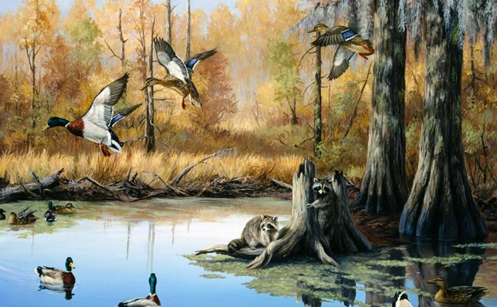 Duck Hunting Hd Wallpaper Hunting Wallpaper Animal Mural Murals Your Way