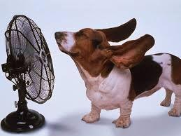 Risultati immagini per immagini cani