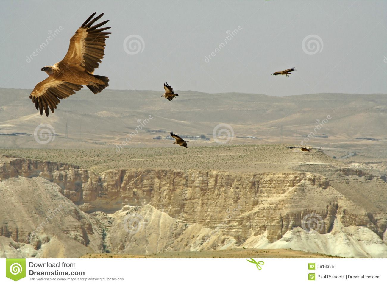 Birds Of Prey Desert Royalty Free Stock Photo  Image: 2916395