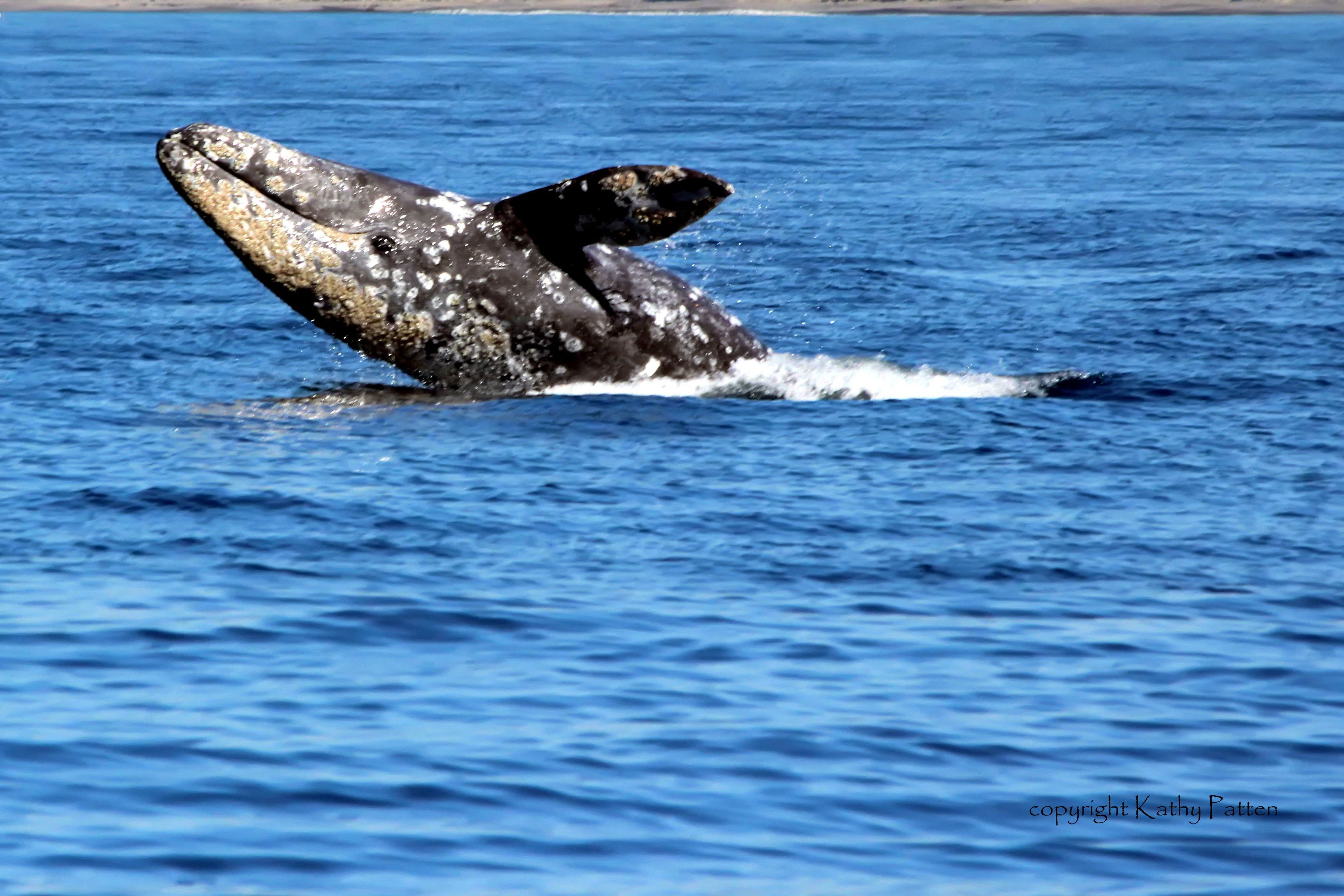 Dana point festival of the whales vacation trips whale