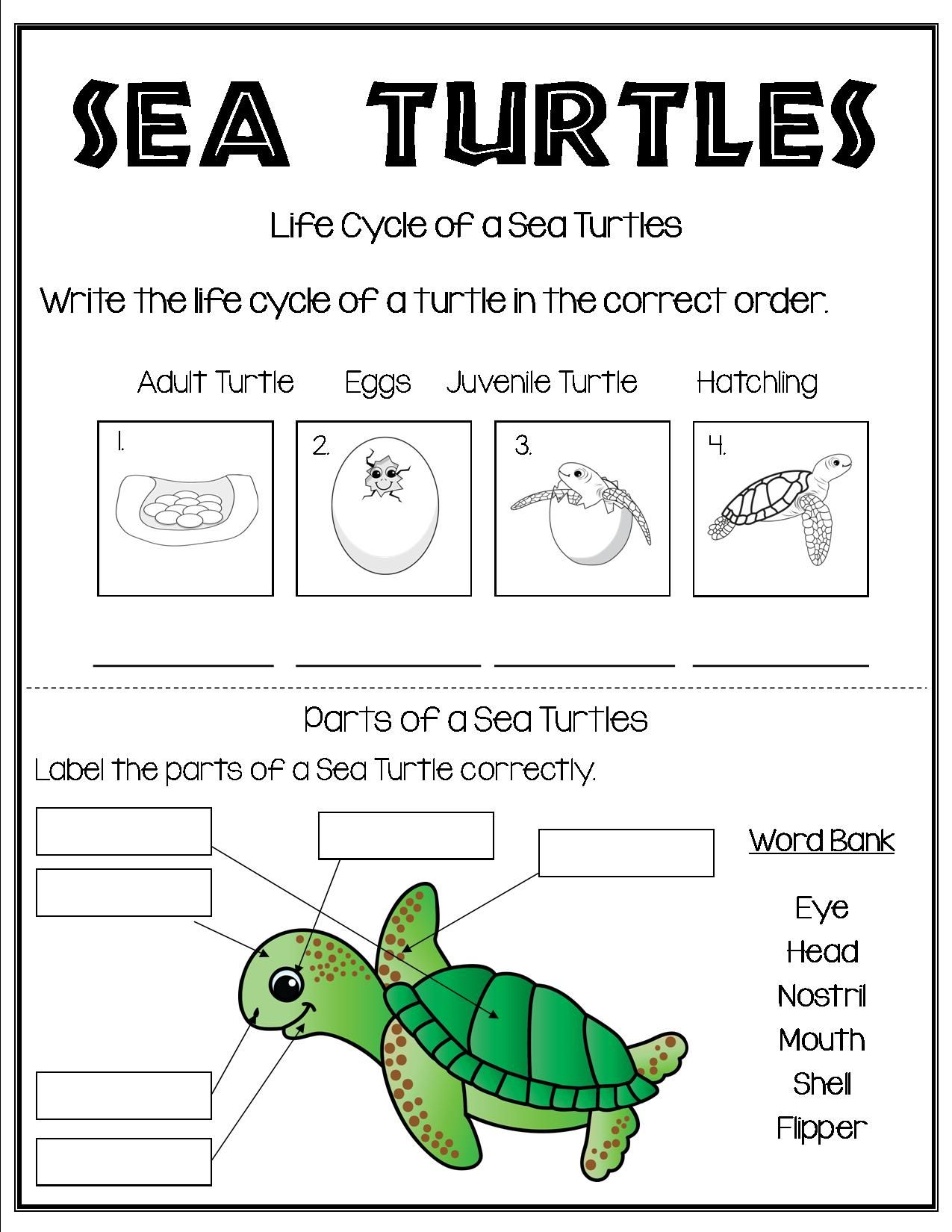medium resolution of All About Sea Turtles   Turtle life cycle
