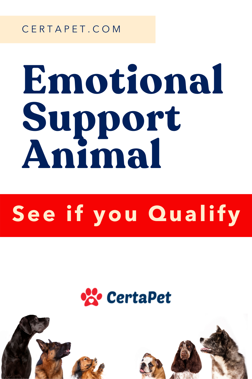Getting your emotional support animal is as easy as 1, 2