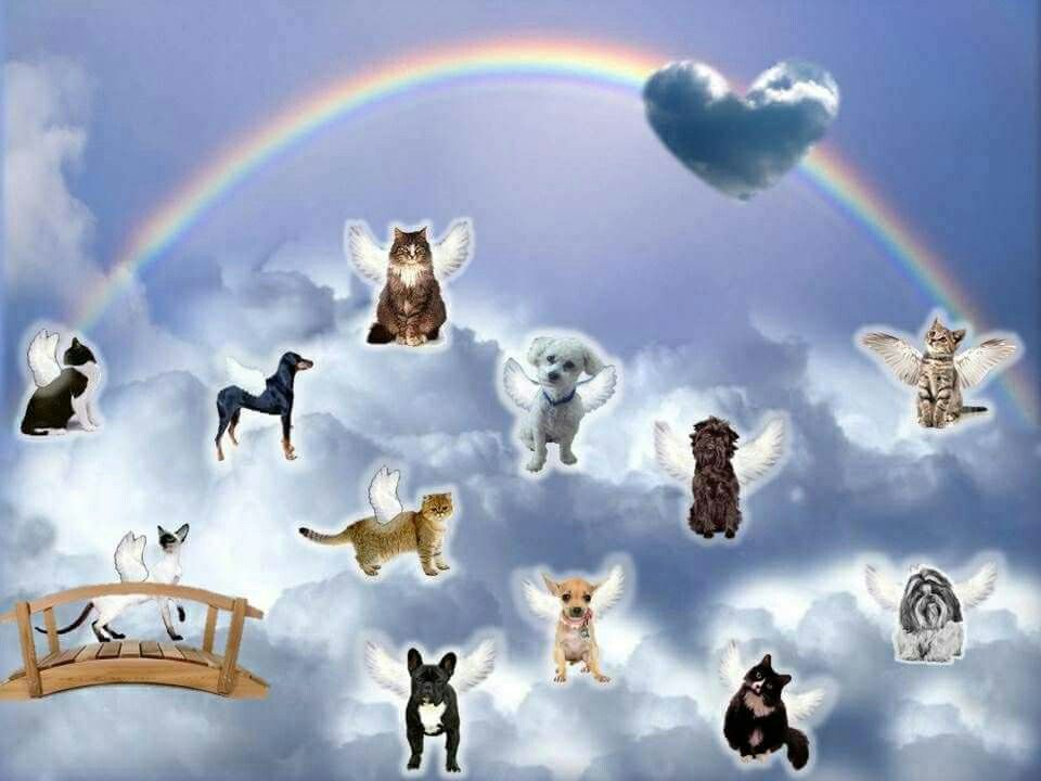 Don T Worry Mommy I Made It Over The Rainbow Bridge I M Here With