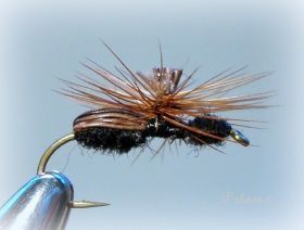 Perfect Ant - On The Vise