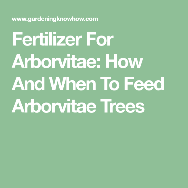 Fertilizer For Arborvitae How And When To Feed Arborvitae Trees Arborvitae Tree Arborvitae Fertilizer
