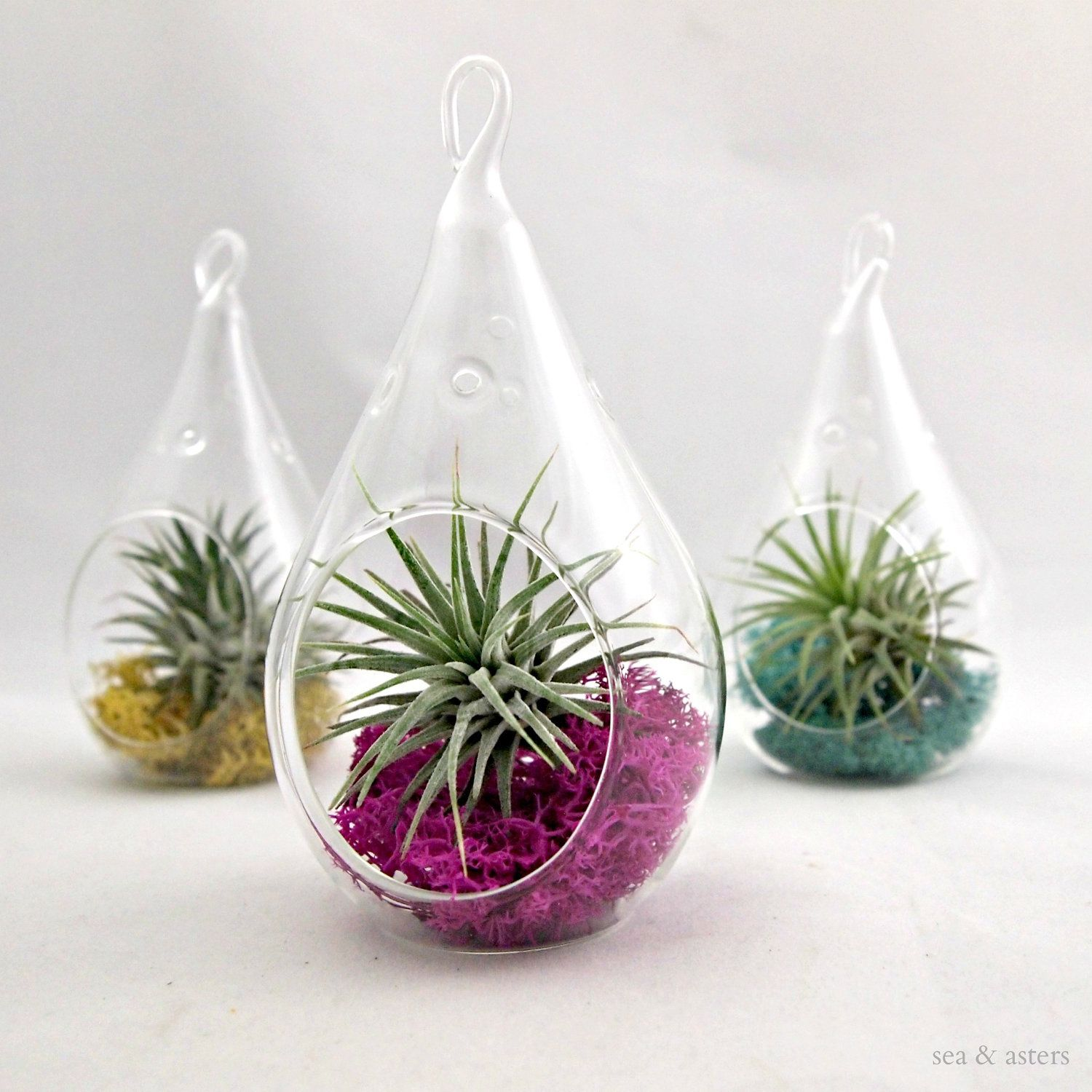 Small Water Drop Air Plant Terrarium // Choose Your Own Moss Color. $15.00,