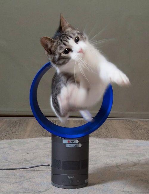 扇風機で曲芸s ゚d゚ おかしな動物 猫 ねこ