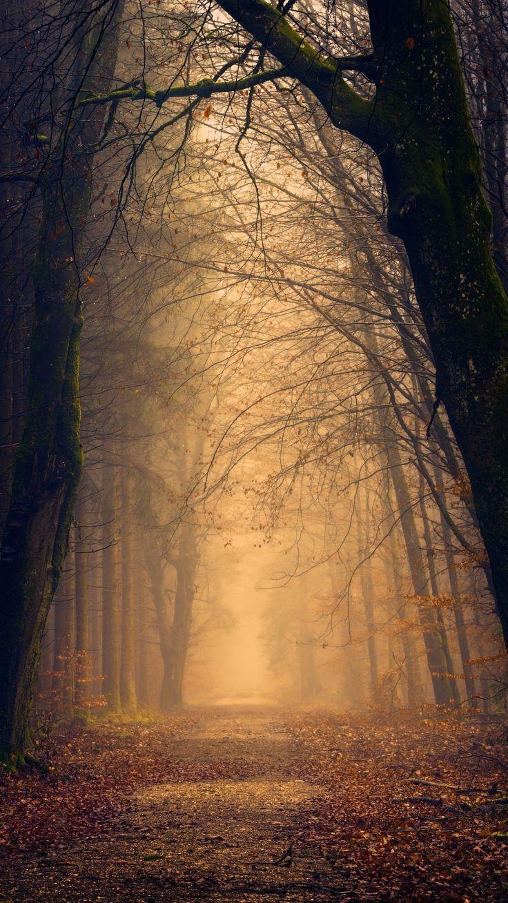 #Herbst #Bäume #Park #Natur #Tapeten #Schloss … –