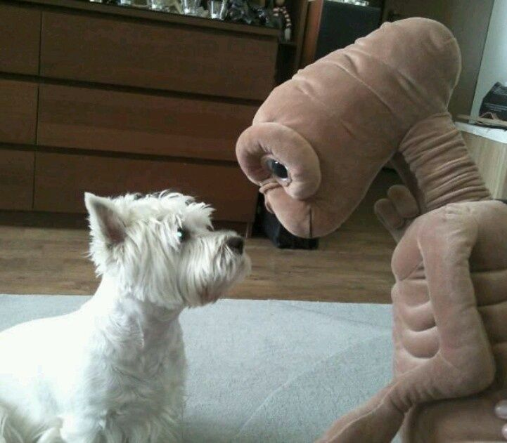 Pin by JoAnn Morath on Westies Westie dogs, Dog quotes
