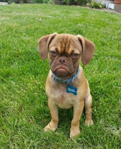 Pin By Joanne Wilborn On My Animal Pics Grumpy Dog Funny