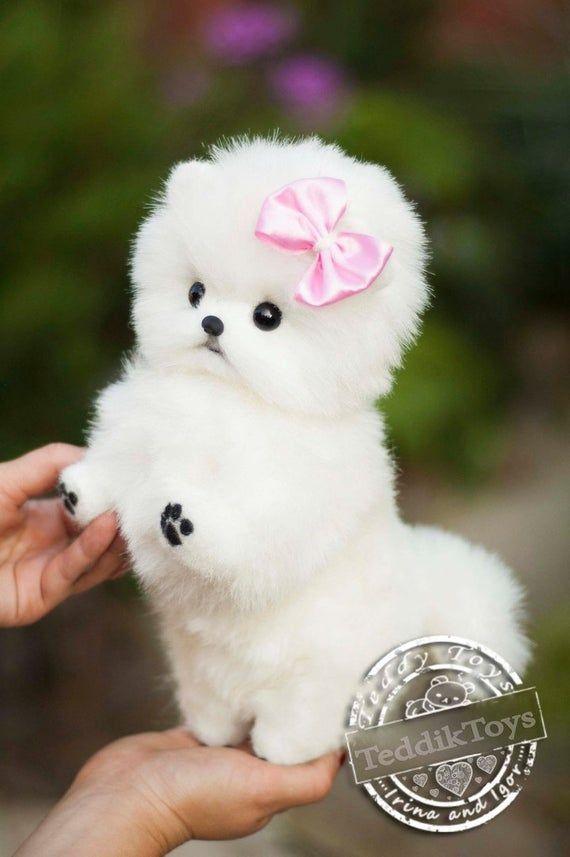 Cachorro Spitz Mimi (hecho a la orden) perro de peluche, pequeño Spitz, Pomerania perro de colección de peluche artista de juguete retrato mascota animal por foto