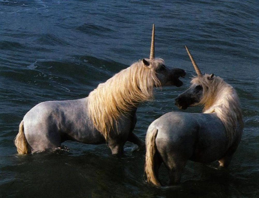 2 unicorns and water
