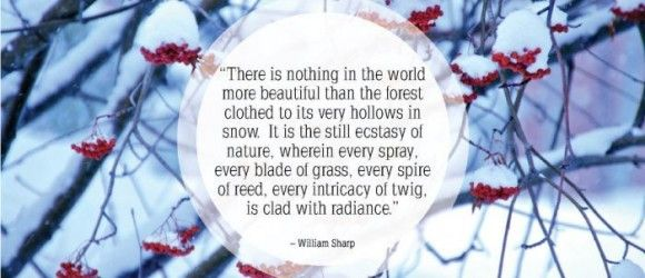 Quotes Of The Week Snow Quotes Pinterest Snow Quotes